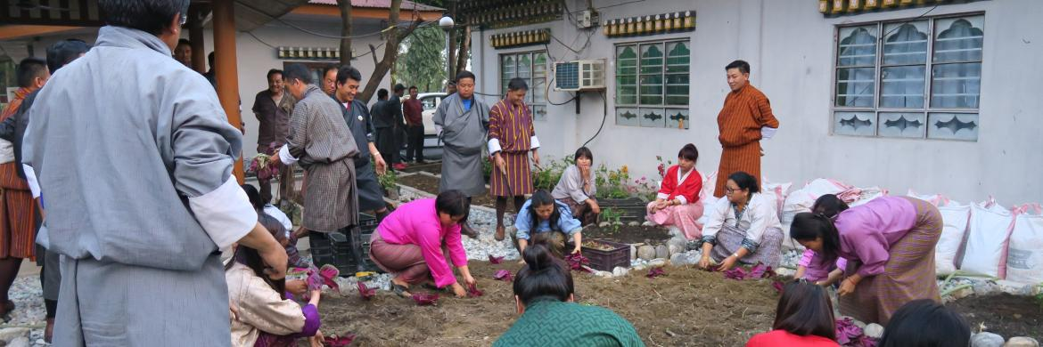Beautifying Gelephu Thromde